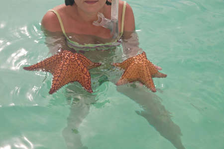 starfish  photo