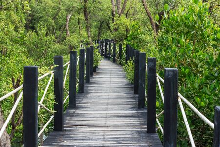 Board walk into the mangrove forest, Chonburi, Thailand  photo