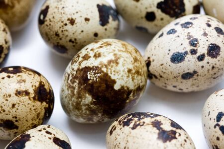 quail eggs on neutral white background Stock Photo - 4495667