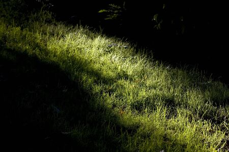 vanishing: vanishing sunbeam on the bright green grass