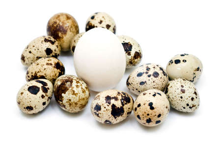 different eggs on neutral background Stock Photo - 4849047