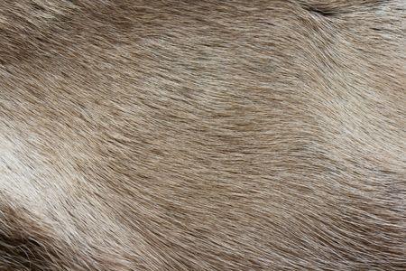 texture of the reindeers fur closeup