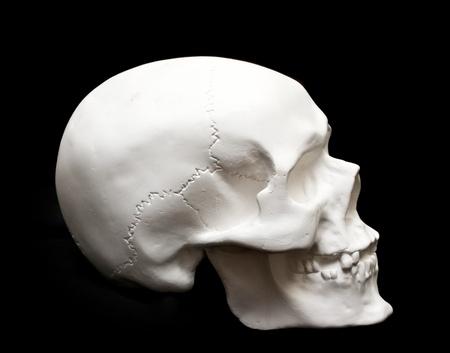 human skull isolated on black photo