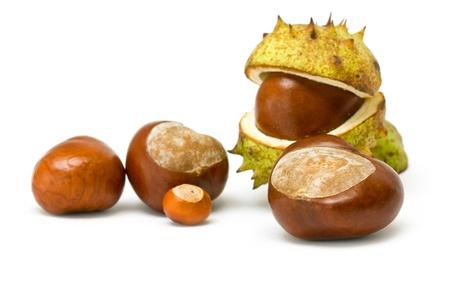 chestnut isolated on white Stock Photo