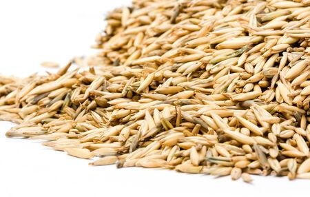 oats close up Stock Photo