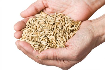Weizen in der Hand der Frau