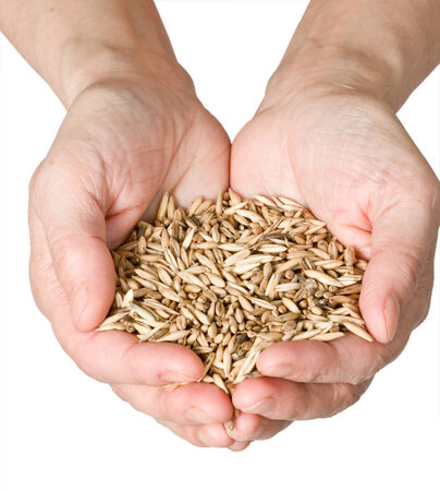 cupped hands: wheat in womans hand