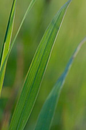 grass in a sunbeam Stock Photo