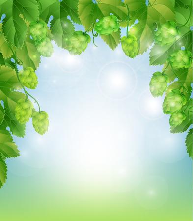 hop plant: background with hops Illustration