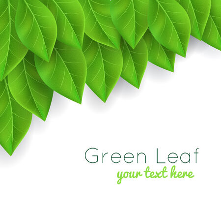 green leafs: background with green leaves realistic Illustration