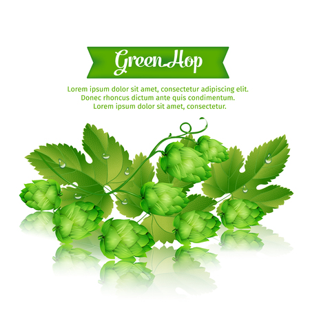 illustration with sprigs of fresh green hops isolated