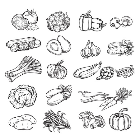cabbage: vector conjunto de diferentes vegetales dibujados a mano, aislamiento de línea negro Vectores
