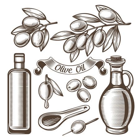 Vector set of olive oil , ancient vintage style. Scratchboard Illustration.
