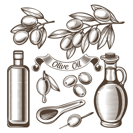 scratchboard: Vector set of olive oil , ancient vintage style. Scratchboard Illustration.