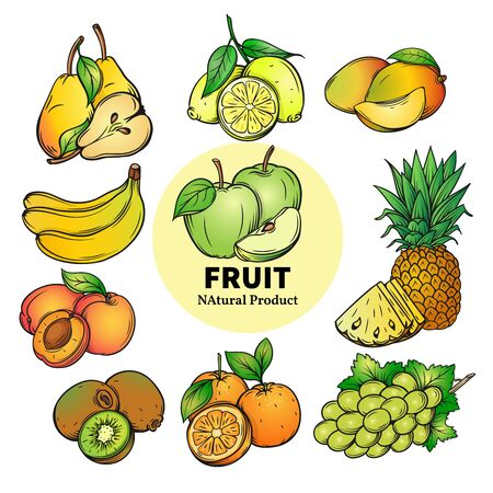 tropical garden: set of colorful tropical and garden hand draw fruit