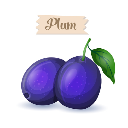 plums: Vector illustration bright blue ripe plums. Cartoon food icon.