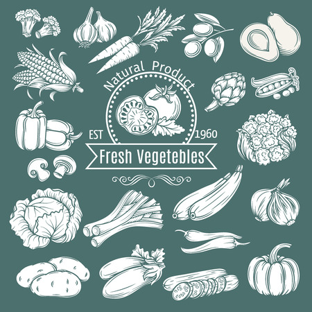 Set hand draw decorative isolated vegetables. Vector illustration.