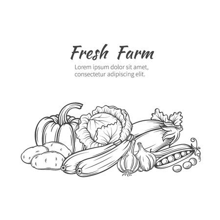 Hand gezeichnet Gemüse Banner mit Kürbis, Kartoffeln, Kohl, Zucchini, Auberginen, Knoblauch, Erbsen.