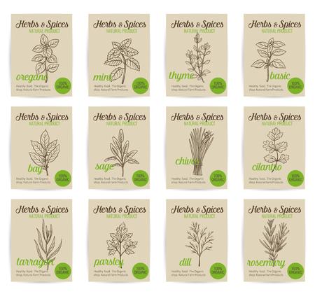 albahaca: vector dibujado a mano las hierbas culinarias y especias carteles establecidos. Ilustración de estilo vieja de la tinta.