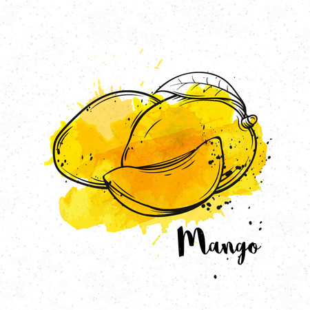 icone: Vector mano disegnata mango su uno sfondo di acquerello giallo. Vettoriali