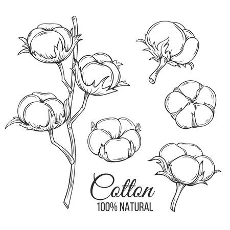 Dibujado a mano las flores de algodón decorativos. Ilustración del vector en estilo de la tinta de edad.