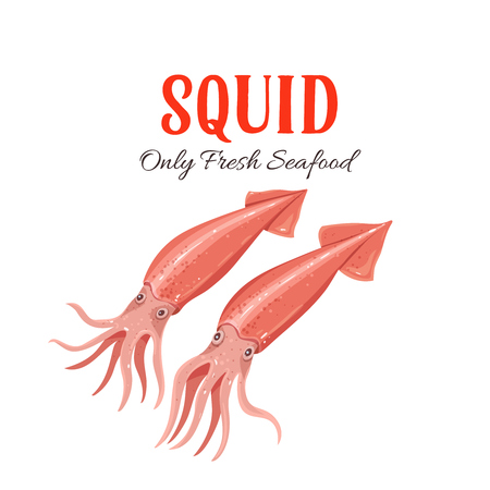 Squid vector illustration in cartoon style. Seafood product design.