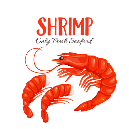 Shrimp vector illustration in cartoon style. Seafood product design.