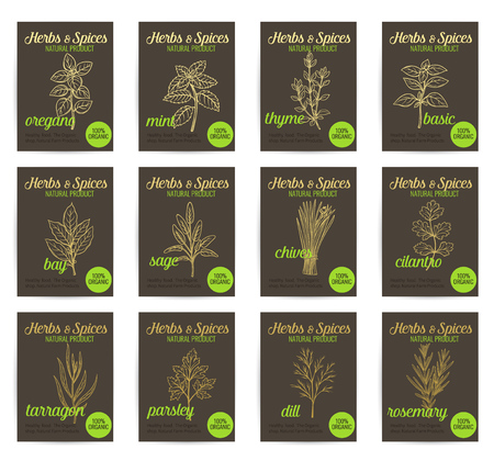 aromatic: Vector hand drawn culinary herbs and spices posters set. Template, page decoration.