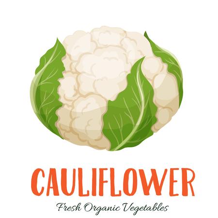 Vector cauliflower vegetable