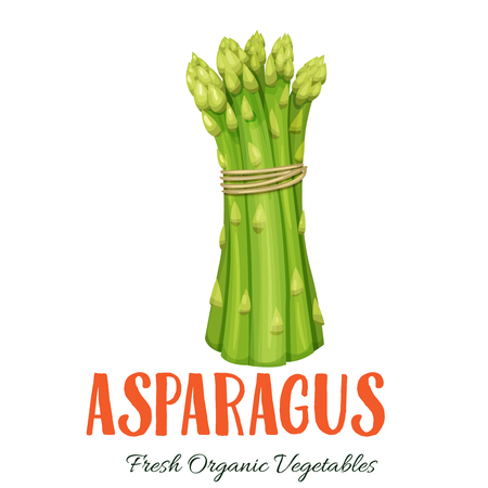 Vector asparagus vegetable