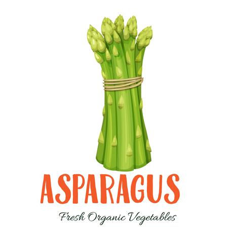 Vector asperges groente