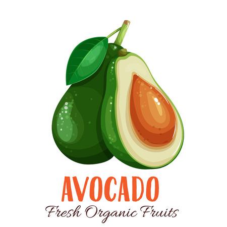 Vector avocado illustration. Illustration