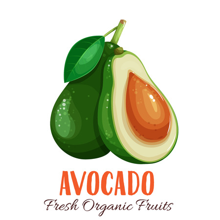 Vector avocado illustration. Çizim