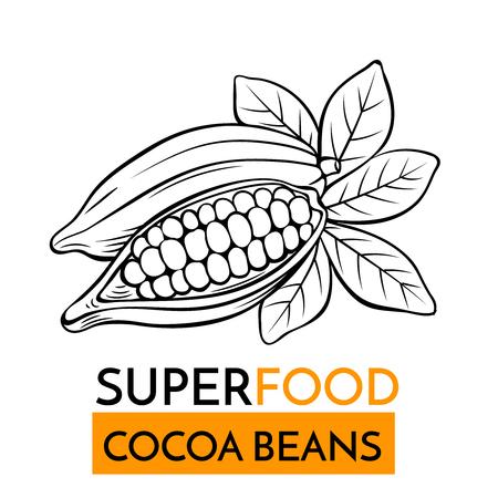 Hand getrokken vectorpictogram superfood cacaobonen. Schetsillustratie in uitstekende stijl. Ontwerpsjabloon Gezonde voeding.