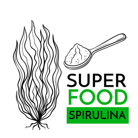 Hand drawn vector icon superfood spirulina. Sketch Illustration in vintage style. Design Template Healthy food.