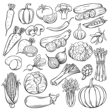 Vector hand drawn vegetables icons set. Sketch style collection farm product restaurant menu, market label. 矢量图像