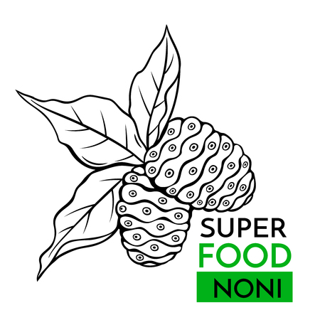 Hand drawn vector icon superfood noni . Sketch Illustration in vintage style. Design Template Healthy food. Vectores
