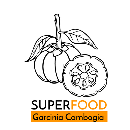 Hand drawn vector icon superfood garcinia cambogia. Sketch Illustration in vintage style. Design Template Healthy food.
