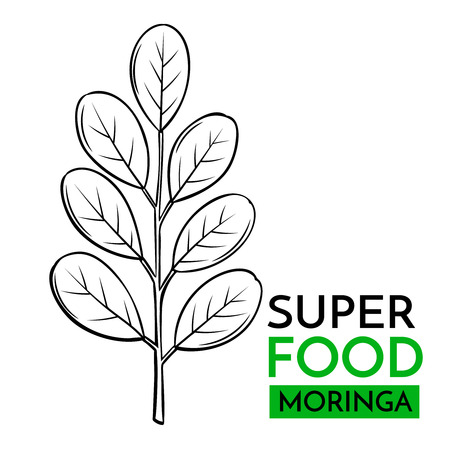 Hand drawn vector icon superfood moringa. Sketch Illustration in vintage style. Design Template Healthy food.