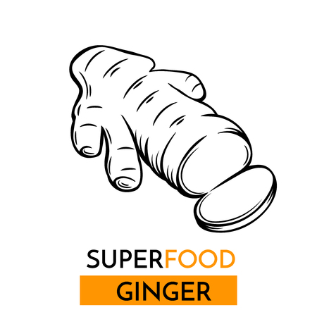Hand drawn vector icon superfood ginger . Sketch Illustration in vintage style. Design Template Healthy food. Illustration
