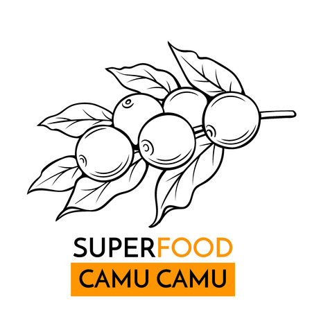 vector icon superfood camu camu