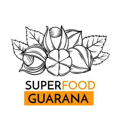 maca: A vector icon superfood guarana illustration.