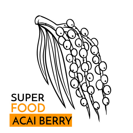A vector icon superfood acai berry illustration.