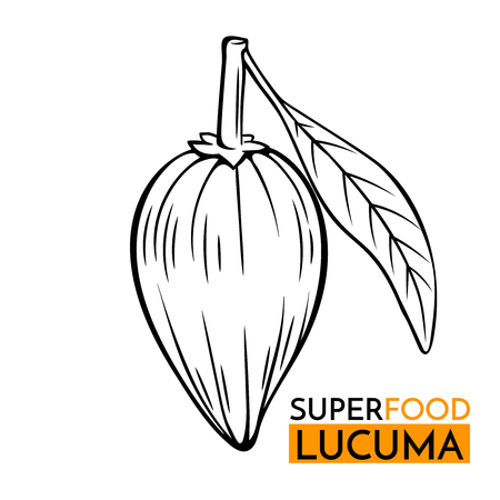 A vector icon superfood lucuma illustration.