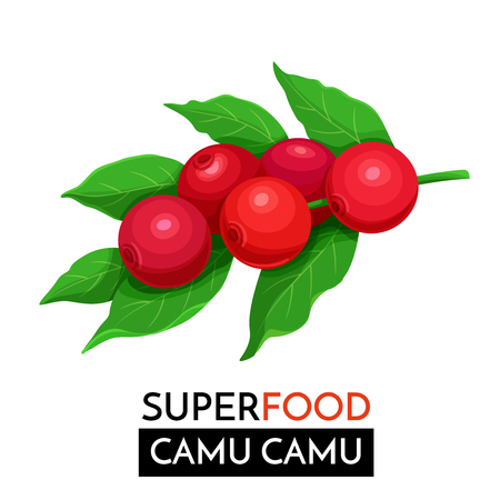 ?amu camu vector icon. Stock Illustratie
