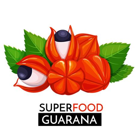 Guarana vector icon.