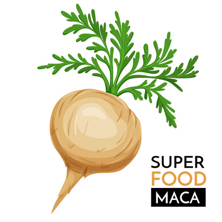 Maca vector icon.