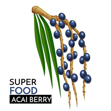 Acai berry vector icon.