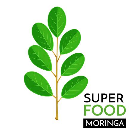 Moringa-Vektor-Symbol. Standard-Bild - 84705402