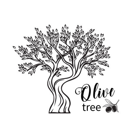 Vector hand drawn olive tree in retro sketch style for ancient greek label , emblem market